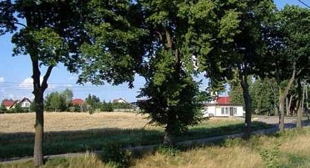 Przydrożne drzewa (fotografia z Flickr od użytkownika icanlearnenglish)