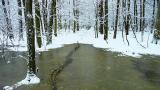 Las Kabacki w zimie